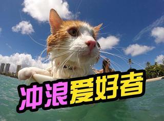 它虽然独眼,但却是声名赫赫的夏威夷酷炫冲浪猫!