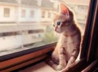 一只猫若能活17年,就有8.5年在等你