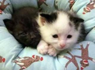 这一窝小奶猫也是任性,有各自的床不睡