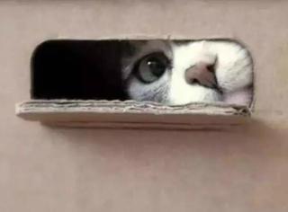 老板,这样的箱子,请给我来一打