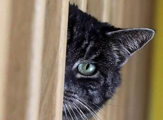 一群持证上岗的猫,一辈子只做好这一件事