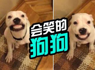 萌宠 | 一说茄子就笑,五个月大的狗宝宝笑得萌死人