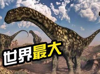 世界上最大号的恐龙在阿根廷被发现!