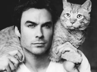 帅哥,你家还缺猫吗?