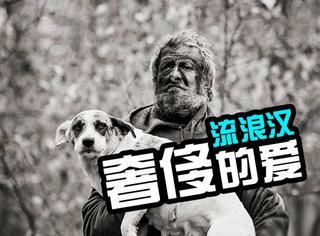 流浪汉16年私自收养31条流浪狗,面临当局指控结局感人