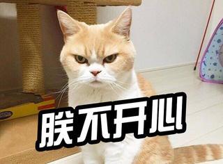 萌宠|这只猫的脸上写满了大大的愤怒