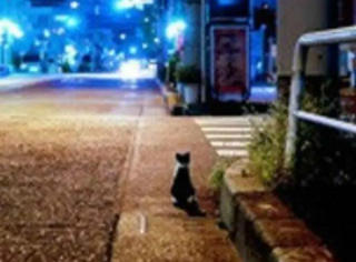 猫爸爸在背后默默守护陪小猫赏月暖酥了
