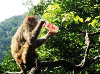 求真相!这群日本猴子靠什么上了中国CCTV?