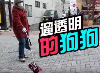 日本街头有只透明狗狗,听说只有心灵纯洁的人能看见!