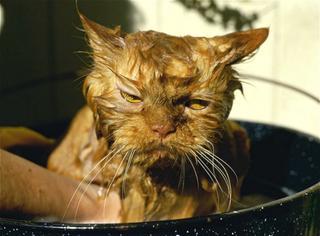 萌宠 | 给一只喵洗澡到底有多难...