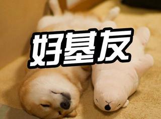 萌宠 | 日本狗明星丸太郎,最近它有了一个好基友...