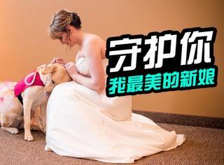 萌宠 | 焦虑症主人要出嫁,汪星人全程守护让她做最美新娘