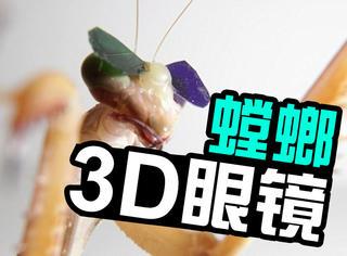 科学家花1000万,给螳螂做了副3D眼镜
