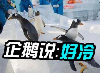 哈尔滨冷出新高度,企鹅冻得直哆嗦!