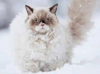 第一次见到雪的南方人