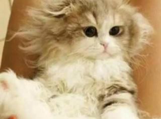这一双迷人的大眼睛,不知道秒杀了多少猫咪控们