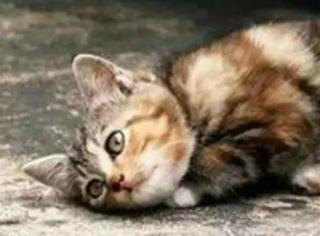救助流浪猫狗,给他们一个温暖有爱的家