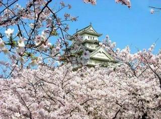 2016日本最全赏樱指南,带上这份攻略避开人山人海