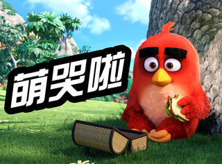 看完《愤怒的小鸟》预告片,终于知道小鸟为什么愤怒了