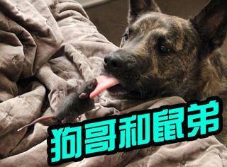 【萌宠】狗狗和老鼠也可以成为最合拍的好朋友!