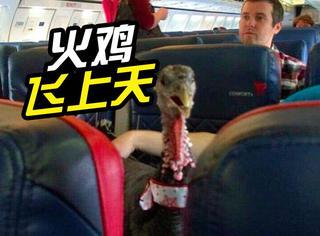 """这只火鸡作为""""感情安抚帮手"""",上飞机了..."""