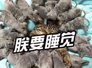 """日本一只猫咪被""""老鼠""""围攻,依然蛋定睡觉"""