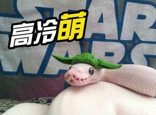 【萌宠】给蛇带上帽子,又高冷又软萌
