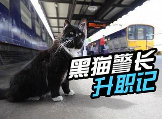 现实版黑猫警长:抓了5年的老鼠,终于升职了!