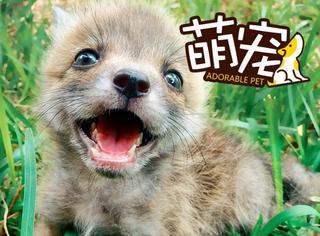 【萌宠】完蛋,被这只爱笑的狐狸小姐勾了魂...