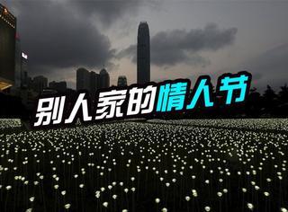 """25000朵""""白玫瑰"""":香港情人节之夜美得你不要不要的"""