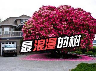 情人节虐狗:世界上最浪漫的树,而且只有一棵