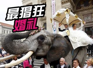 马戏团和杂技演员情人节骑大象结婚,路人吓呆...