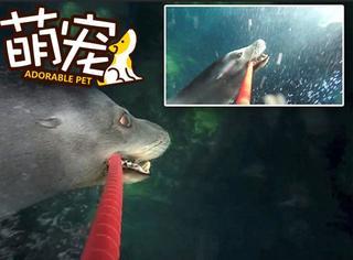 【萌宠】这只海狮玩自拍玩嗨了!