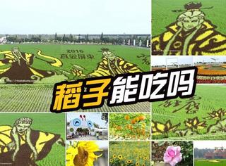 他们在稻田里种出经典魔幻角色,还是3D的