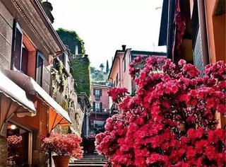 当我们在城市花光了年轻,就到一处鲜花小镇度过余生