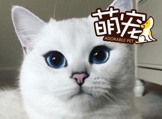 【萌宠】这只喵自带眼线美瞳,萌到我呼吸困难...