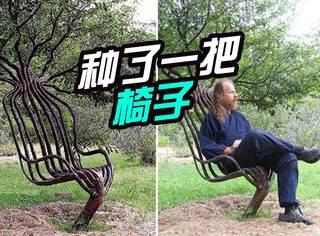 有人花了十几年时间,就为种出一把可以坐的椅子