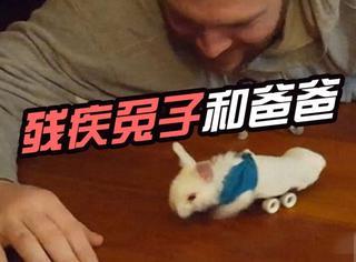 当一只残疾兔子遇见一个暖男老爸,这画面太暖