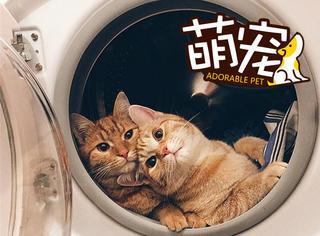 【萌宠】这对喵兄弟把洗衣机当太空舱,高冷、卖萌无缝穿插!
