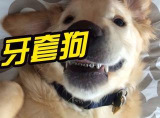 一只闭不上嘴巴的汪,主人给它戴上了牙套矫正…