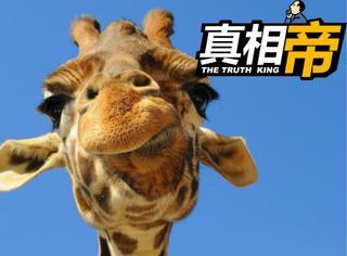 【真相帝】这有9个关于动物的冷知识等着你,莫名戳中萌点...