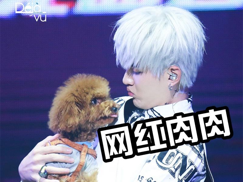 现在连一条狗都能上热搜了,吴亦凡家的肉肉不要太幸福!