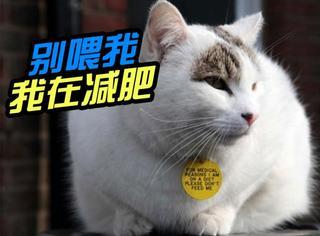 英国肥猫被迫挂牌警告路人:别喂我,我在减肥!