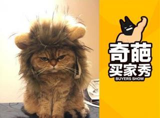 【奇葩买家秀】喵星人戴上假发,每个造型都是表情包!