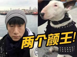 黄渤孙红雷,你们这么撕,考虑过狗的感受吗?