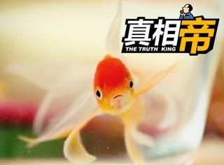 【真相帝】谁说鱼的记忆只有7秒?人家记性好着呢!