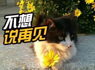 """昆明一中""""校猫""""奥利奥去世,这世间又多了场传奇的葬礼"""