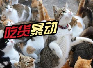 日本猫岛缺猫粮大咪集体暴动,岛民向外求助,结果...