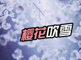 """武大惊现""""樱吹雪"""":樱花雨和雪更配哟"""