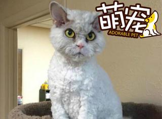 """【萌宠】这只猫整天生气,起了个名字还叫""""爱因斯坦""""!"""